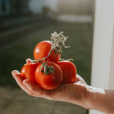 Strangest teacher gifts: One teacher was given a beef tomato by a pupil