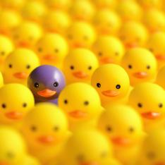 CPD: One purple duck, in among lots of yellow ducks