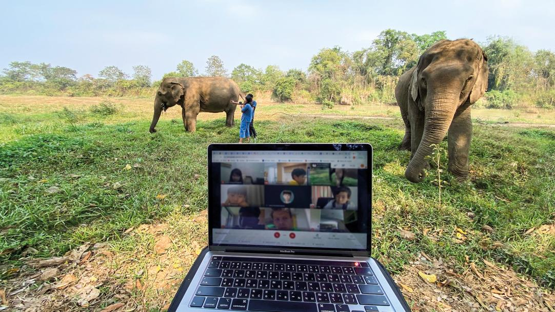 Covid and online learning: Sending the whole school on a virtual elephant safari school trip