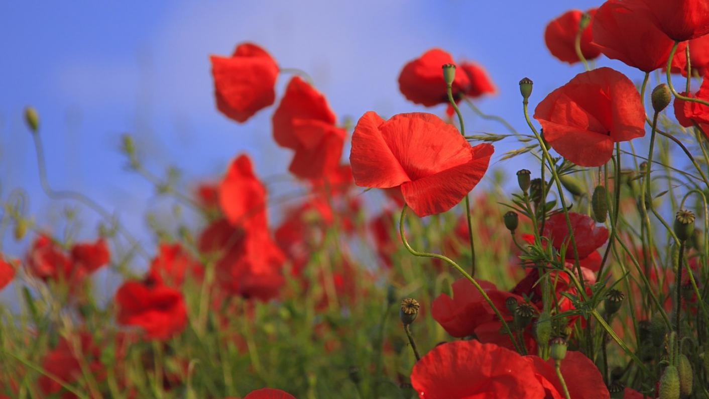Let's use Remembrance Day to celebrate creativity in schools, says Professor Bill Lucas