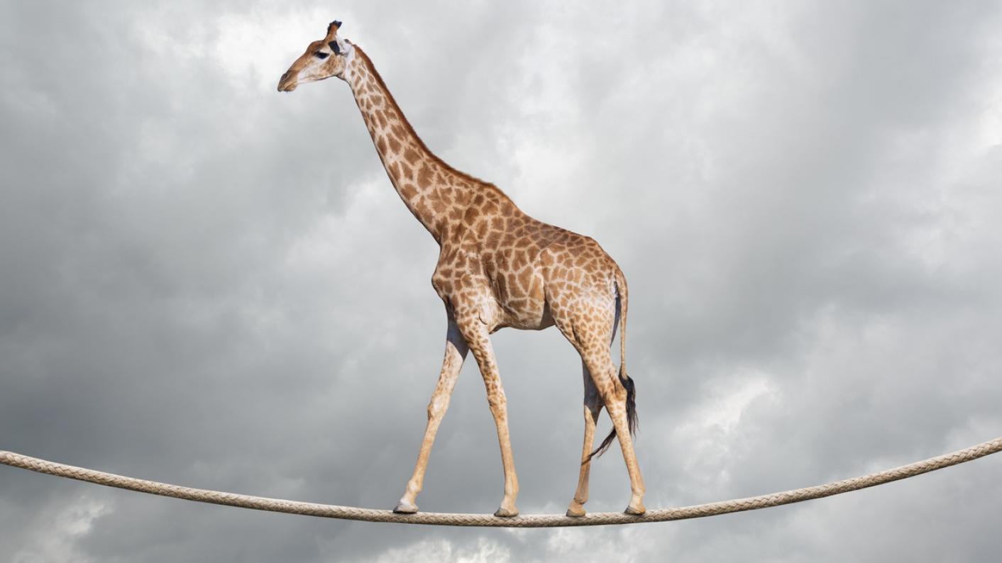 giraffe on a tighrope