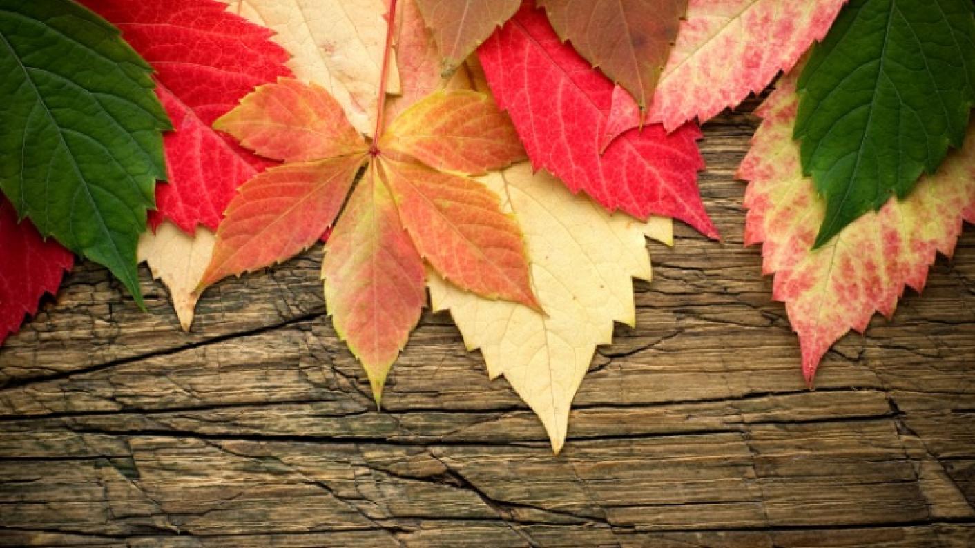 Autumn Leaves Found By Nursery & Reception Children On An Outdoor Walk