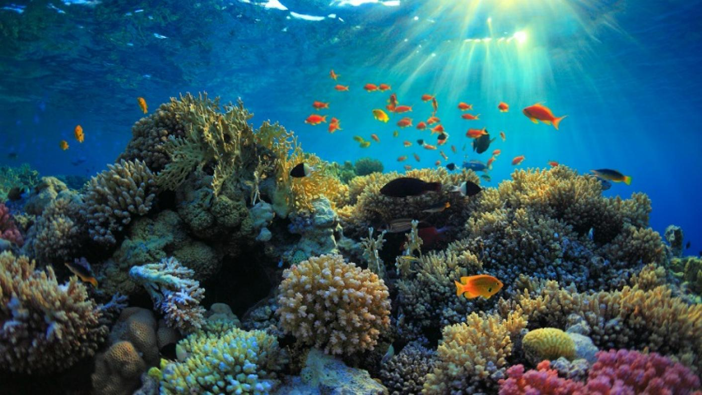 Primary science image of a barrier reef showing living things and their habitats